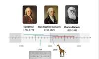 Evoluce a vývoj organismů - Darwinismus