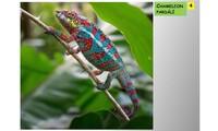 Systém a evoluce strunatců - plazi (ještěři)