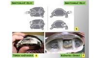 Systém a evoluce strunatců - plazi (želvy)