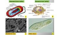 Buněčná stavba a fyziologie buněk, rozmnožování buněk