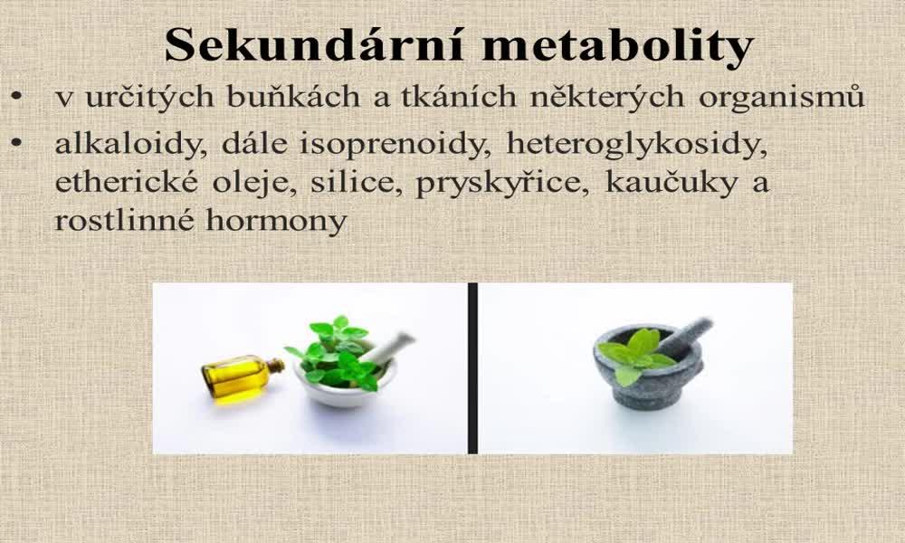 2. náhled výukového kurzu Alkaloidy