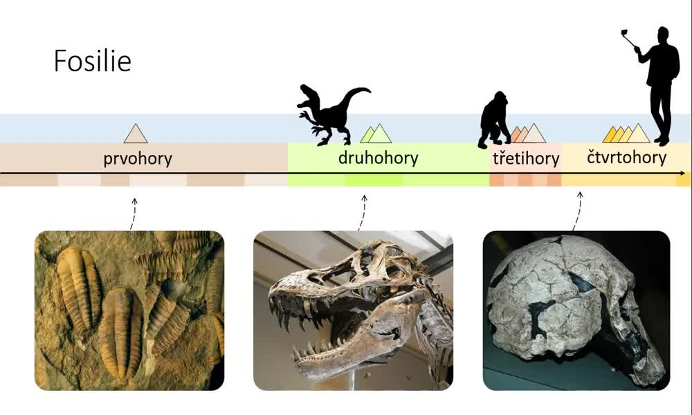 2. náhled výukového kurzu Důkazy evoluce