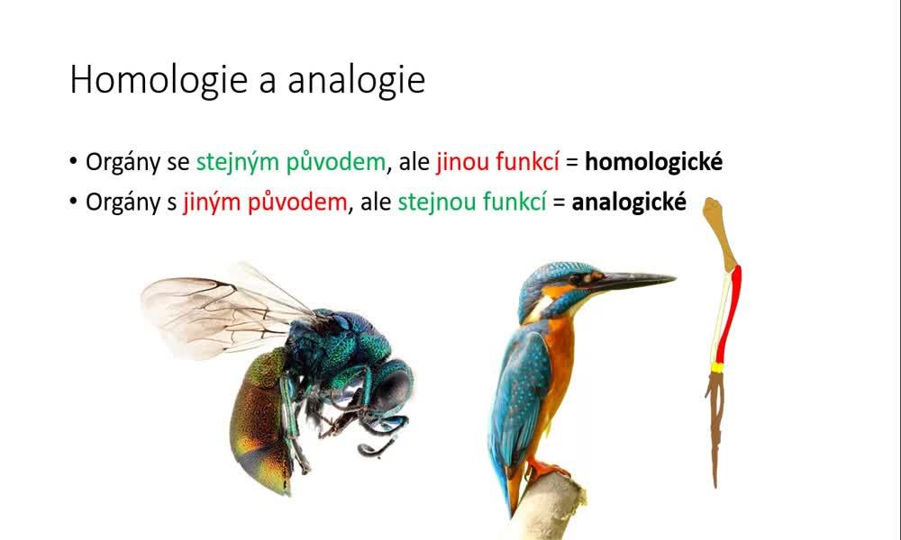 6. náhled výukového kurzu Důkazy evoluce