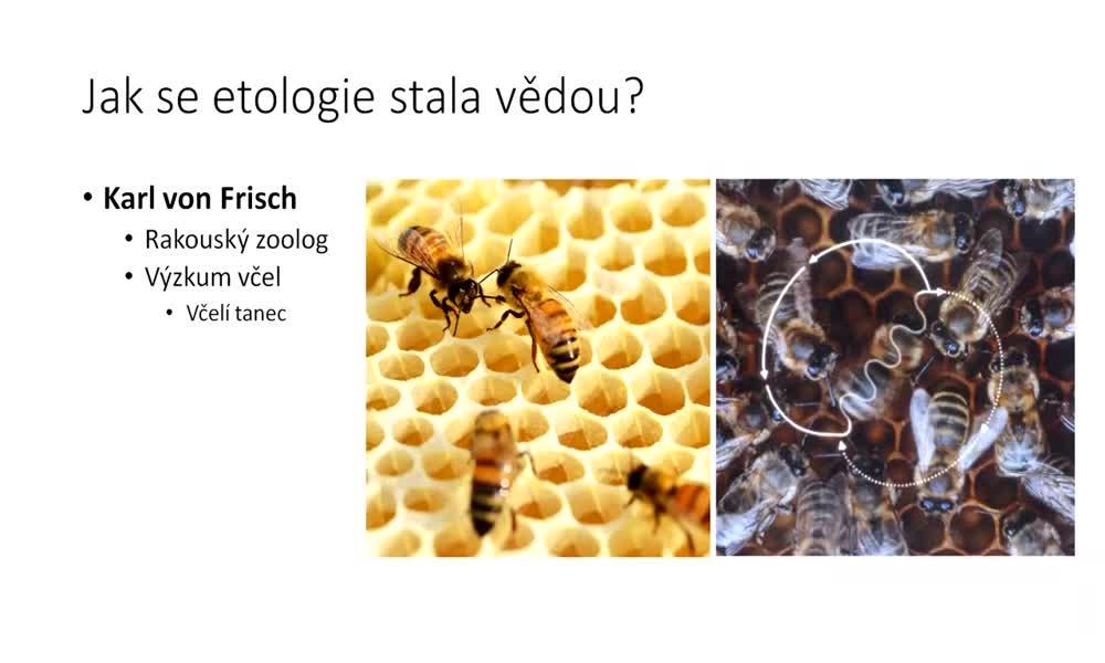 6. náhled výukového kurzu Etologie - co je to etologie